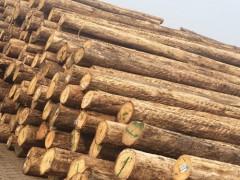 求购桉木原木