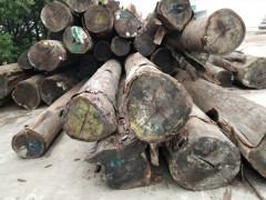 供应南美菠萝格原木