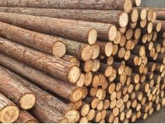 长期收购2米杉木