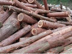 求购杉木、柏木原木