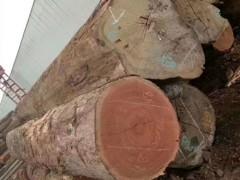 供应杂木工程料、家具材、楼梯扶手料