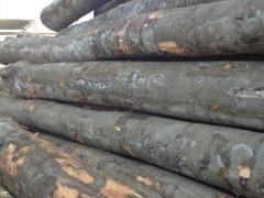 求购欧洲进口榉木原木