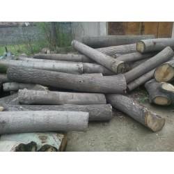 求购桐木原木