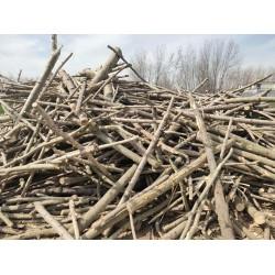 大量收购3-7公分杨木树枝