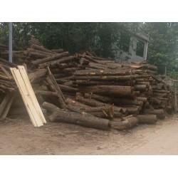 高价收购刺杉根部材、水杉原木