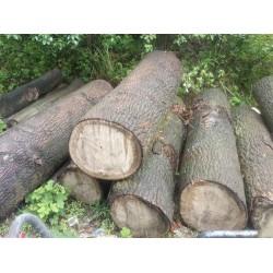 大量收购桐木原木