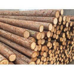 求购杉木原木