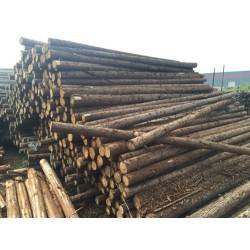 大量求购杉木原木