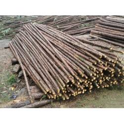 长期采购杉木绿化撑杆