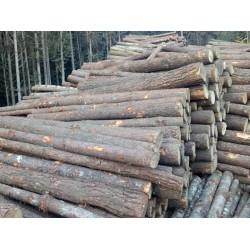 长期釆购松木原木
