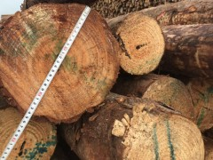 供应四六米澳松打桩木、包装材