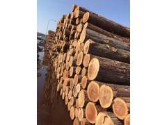 日本原木销售