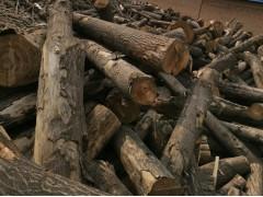 大量销售桐木原木、桐木规格板