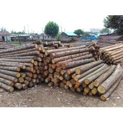 长期求购2米杉木