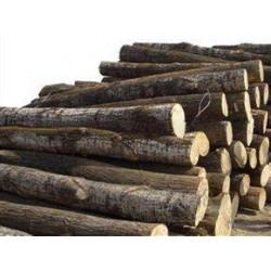 长期采购松木、杨木