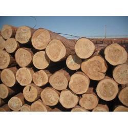 求购4米樟子松原木