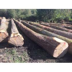 大量求购欧洲白橡原木与大方