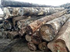供应新鲜杂木