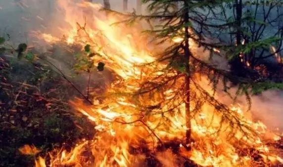 俄罗斯森林大火