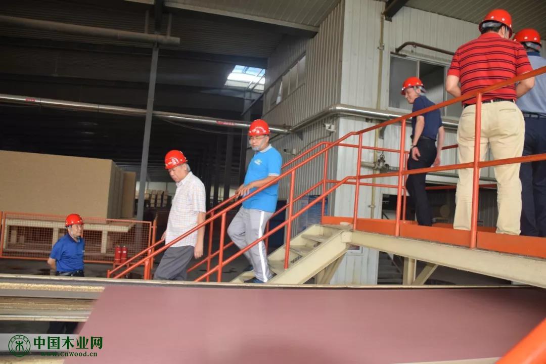 部分与会专家和代表参观了易县圣霖板业  有限责任公司刨花板生产线