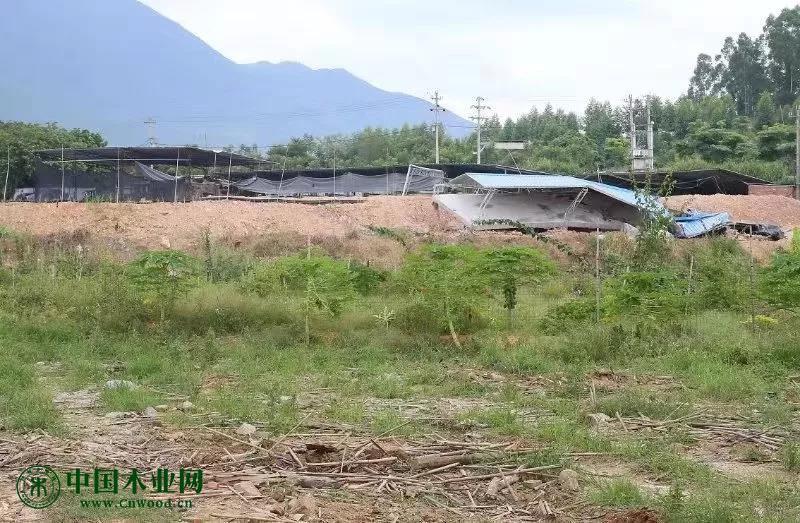 三宝钢铁西侧木材加工厂进行拆除搬离