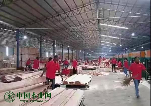 加蓬金山木业的工厂