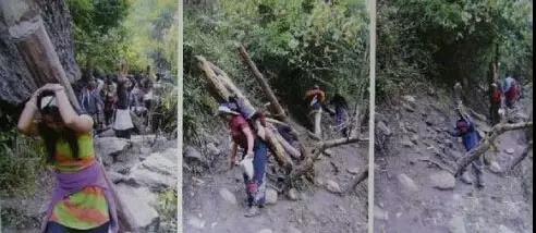 尼泊尔的妇女、老人、小孩都参与紫檀木的搬运