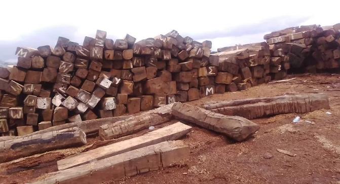 塞拉利昂海斯廷斯(Hastings)机场附近堆放的木材