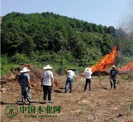 对松材线虫疫木进行集中烧毁