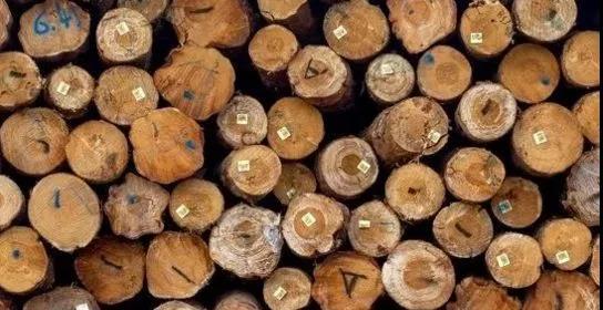 """""""世木会""""9月在渝举行 助力木材行业""""买、卖全球"""""""