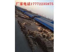 连云港工地木方多少钱一方