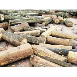 求购椎木(思粒木)、梓木、衫木