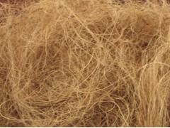 供应椰子产品