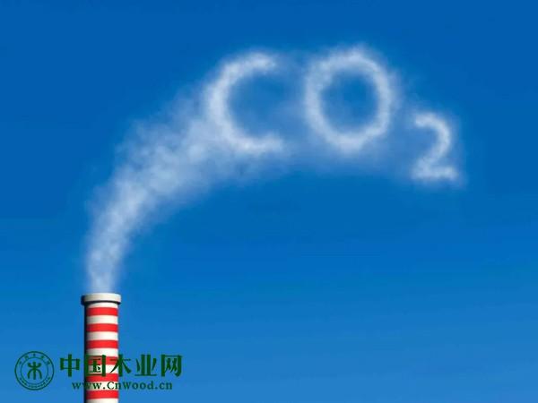 伐木所造成的碳排