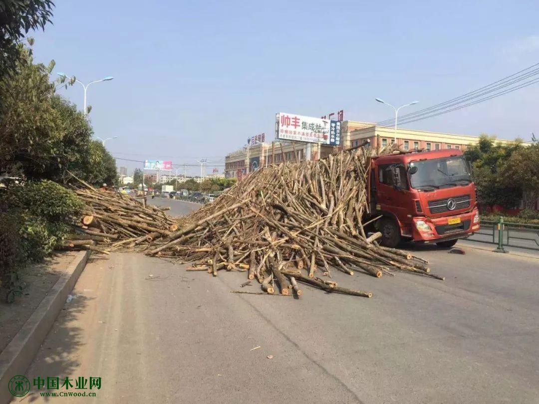 木材倾泻而下
