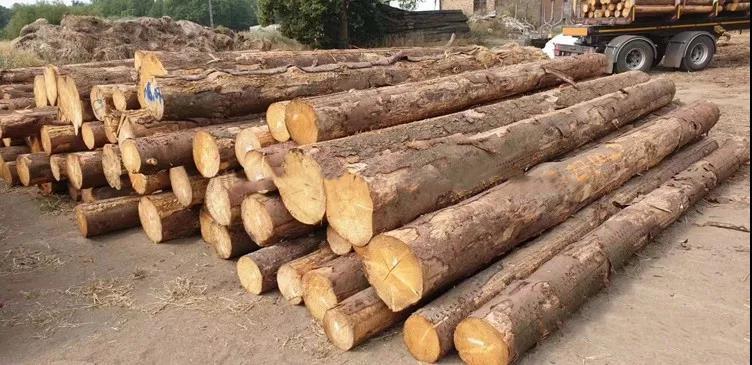 面对困境,未来木材市场应该如何走?