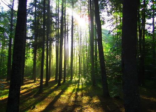 百色市林业总产值将达604亿元