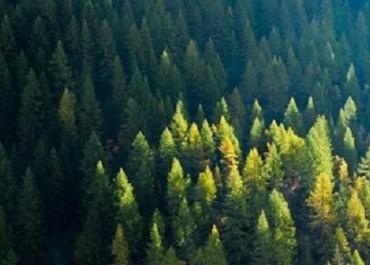 CIFOR开发新方法以解决伐木所造成的碳排放问题