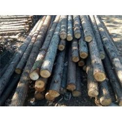 长期采购杉木原木