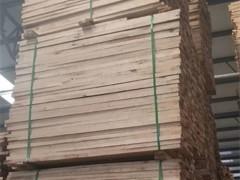 供应大量桦木