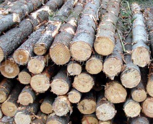 随着锯木厂残渣供应的减少,西弗雷泽转向了森林生物量