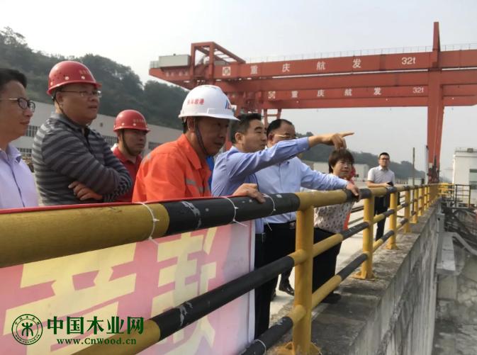 巴南区区委书记辛国荣率队调研中国西部木材贸易港