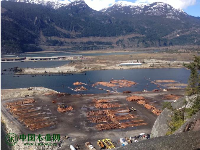 不列颠哥伦比亚省林产行业新计划