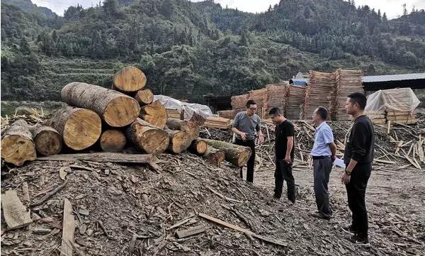 镇远县自然资源局副局长一行到蕉溪镇对木材加工厂进行安全生产检查