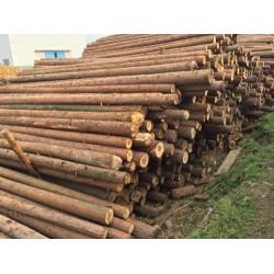 收购杉木原木