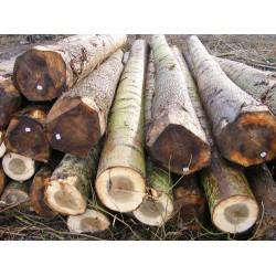 大量收购优质杨木原木