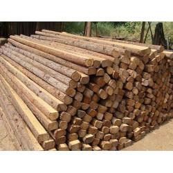 专业收杉木小径材
