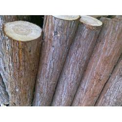 采购松木原木