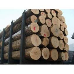 求购国产椴木原木