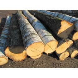 收购大径桦木